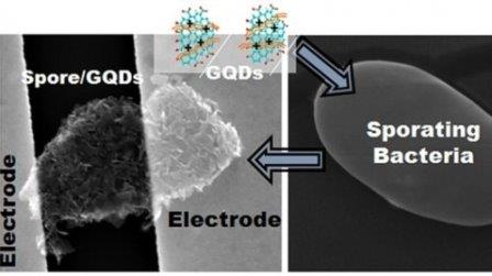 Ученые превратили бактерию в крошечного робота, обернув ее слоем графена