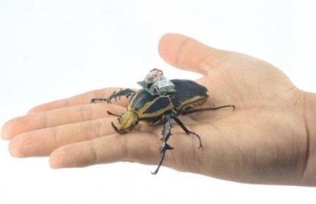 Исследователи с высокой точностью управляют полетом жука-киборга