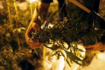 Злоупотребление марихуаны нарушает долговременную память