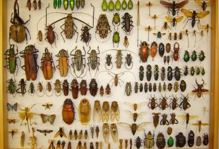 Даже на фоне прочих насекомых жуки – настоящие асы выживания