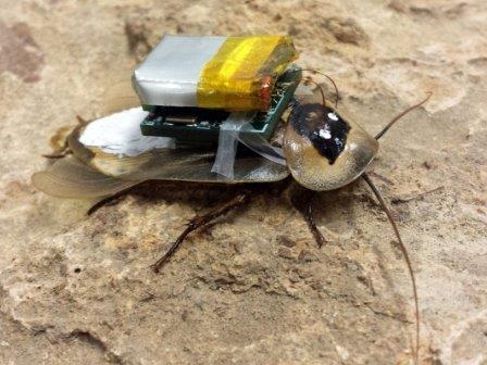 В Техасе создают тараканов с дистанционным управлением