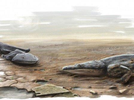 Metoposaurus algarvensis