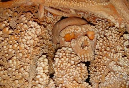 Усыпанные «жемчужинами» осадочных пород останки неандертальца дали древнейший образец ДНК