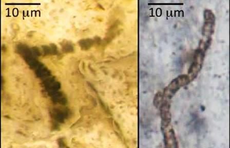 Самые древние окаменелости оказались совсем не окаменелостями