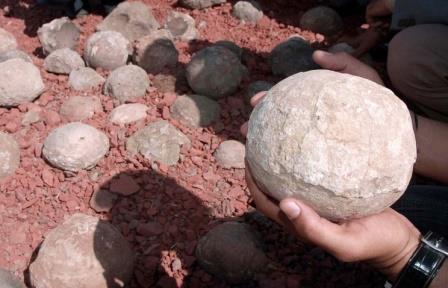 Окаменевшие яйца динозавров