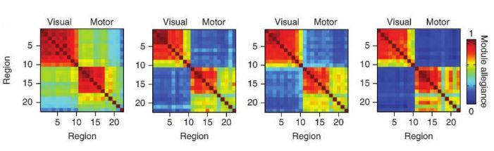 На рисунке показано последовательное повышение автономности работы области мозга