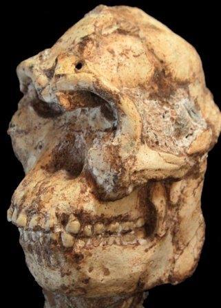 """Репродукция черепа """"Литтлфута"""""""