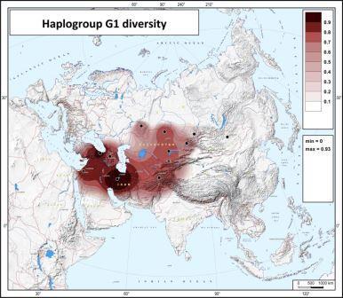 Карта гаплотипического разнообразия гаплогруппы G1.
