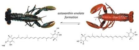 Термическая денатурация крустацианина способствует высвобождению астаксантина, который связан с белком в енолятной форме