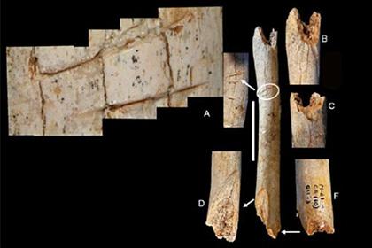 Следы надрезов на бедренной кости неандертальца-ребенка