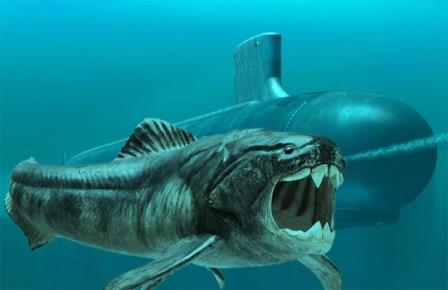 Чем древние рыбы могут помочь конструкторам подводных лодок