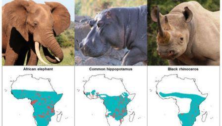 Большинству крупных травоядных на планете угрожает вымирание