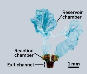 Жук-бомбардир вырабатывает и выбрасывает горячую раздражающую смесь бензохинонов с помощью желез, расположенных в задней части туловища.