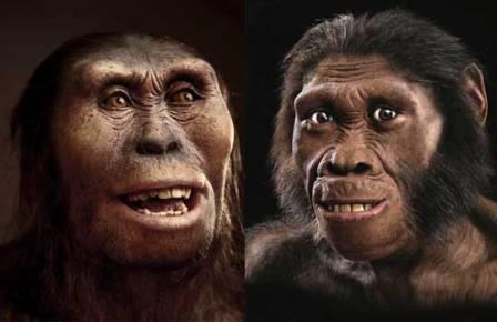 Две различные реконструкции Australopithecus sediba