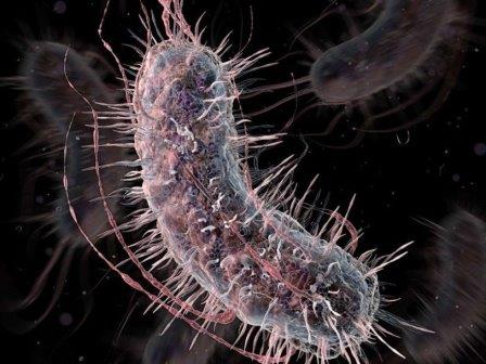 Бактерий научили ставить диагноз