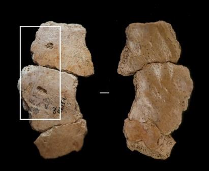 Отметина на черепе, найденном в пещере Кова-Негра