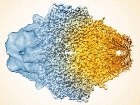 Композитное изображение бета-галактозидазы, демонстрирующее увеличение разрешения электронной микроскопии за последние несколько лет