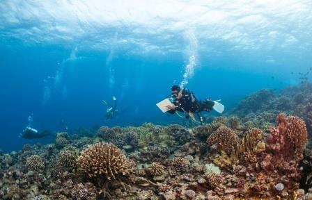 Планктон вырабатывает половину кислорода, которым мы дышим