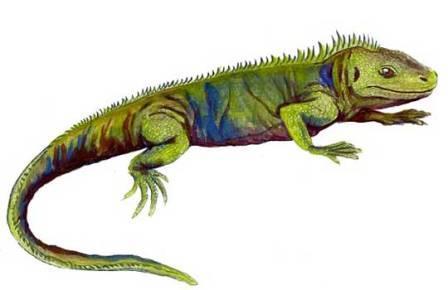 Триасовая гаттерия Clevosaurus sectumsemper