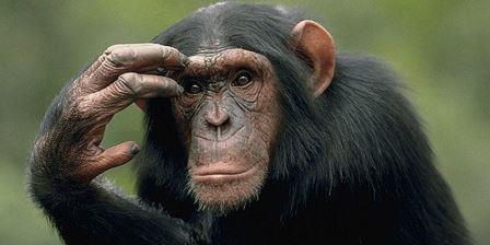 непредсказуемость и необратимость эволюции