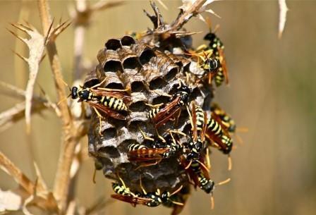 Общественные насекомые берут не умом, а количеством
