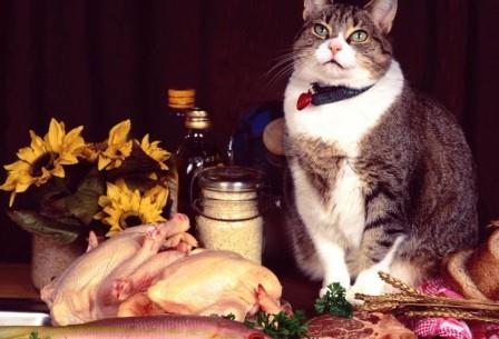 Кошки ощущают намного меньшее количество горьких соединений