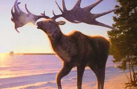 ДНК большерогого оленя рассказала о его вымирании