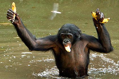 Антропологи объяснили отличия тела человека от обезьяньего