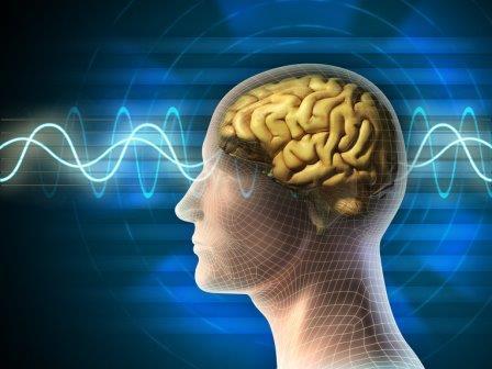 Ученые открыли генетическую программу старения мозга человека