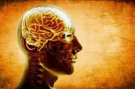 Большой объем серотонина в мозге ведет к социальным фобиям