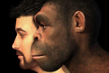 От неандертальцев нам досталось всего около двух процентов генов