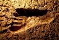 Обнаруженные отпечатки могут оказаться самыми древними следами человека на материке