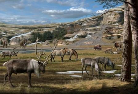 """Животные-""""иконы"""" ледникового периода наслаждаются коротким летом субарктических зон."""