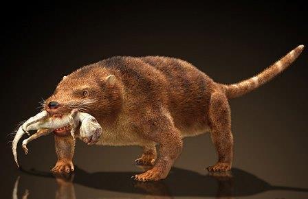 Недавно открытое меловое млекопитающее Repenomamus