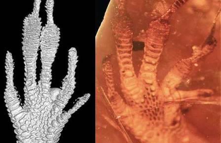Сообщества карибских ящериц не меняются уже 20 млн лет
