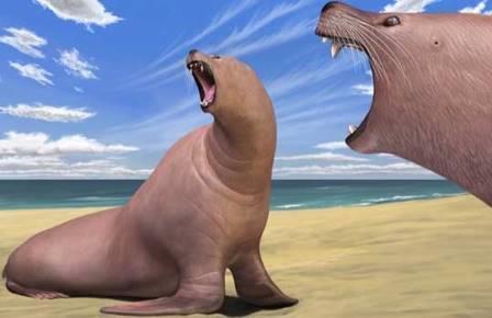 Древние моржи