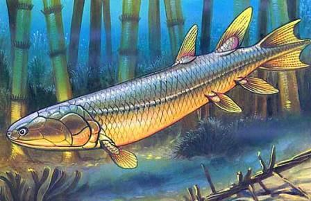 В черепе древней рыбы нашли новую кость