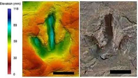 Биолог увидела семью в следах динозавров