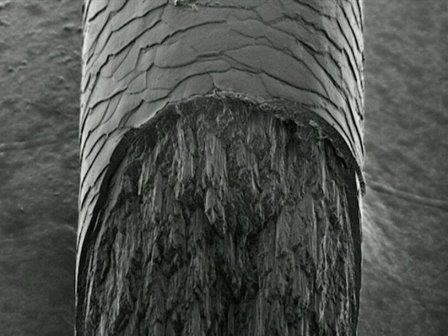Рентгеновские лучи помогли обнаружить неизвестный компонент волос