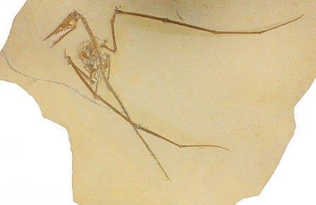 Первый копролит птерозавра озадачил палеонтологов