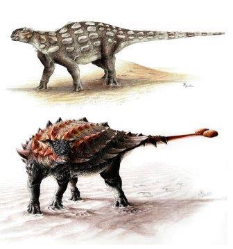 Гобизавр (сверху) и классический анкилозавр вида Ziapelta (снизу)