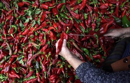 Жгучий компонент красного перца может стать основой лекарств от рака