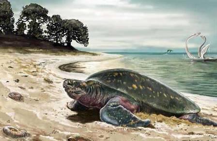 Пейзаж с морской черепахой 120-миллионолетней давности