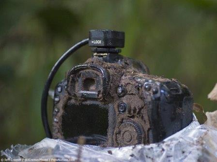 В фотокамере любителя дикой природы поселилась колония термитов