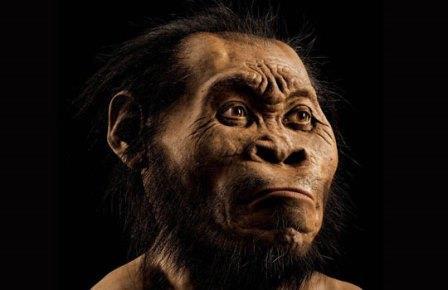 """Южноафриканская """"Колыбель человечества"""" в очередной раз подтвердила справедливость собственного названия. Только что антропологи описали найденный здесь новый, неизвестный ранее вид людей, приходящийся Homo sapiens двоюродными братьями, или, скорее, двоюродными дедушками """"Они отличаются от всего, что мы видели"""", – заявили ученые. Новый человеческий родич, Homo naledi, на первый взгляд не поражает. Ростом порядка полутора метров, весом около 45 килограммов и с мозгом величиной со средних размеров апельсин он выглядел как что-то среднее между настоящим Homo и австралопитеком. Но антропологи уверены, что этот новый человек не только умел использовать инструменты, но и хоронил своих мертвых – а это качество присуще исключительно настоящим людям. Около 1550 разных костей, относящихся к новому виду, исследователи выкопали в укромном уголке пещеры """"Восходящая звезда"""" (Rising Star), входящей в состав объекта всемирного наследия """"Колыбель человечества"""" (Humankind World Heritage Site). По месту находки наш далекий родственник и получил свое имя – на местном наречии """"наледи"""" означает """"звезда"""". Можно с полным основанием сказать, что открытие Homo naledi стало результатом чистой случайности. """"Восходящая звезда"""" исследована уже достаточно хорошо, и в небольшой отнорок пещеры два туриста-спелеолога полезли из чистого любопытства. Ширина прохода составляла немногим больше 20 см, так что когда они обнаружили разбросанные по полу ископаемые кости, с виду очень похожие на человеческие, пробраться за ними к месту находки смогли лишь самые стройные антропологи. Которым и пришлось вскоре искать ответ на вопрос – каким образом остатки множества древних приматов оказались погребены в этом труднодоступном уголке пещеры? """"Мы рассматривали самые разные возможные сценарии – массовую гибель, деятельность неизвестного хищника, перенос останков водой из другого места, случайную смерть в природной ловушке и так далее. Но после отработки всех этих вариантов у нас остался лишь один сценарий – предна"""