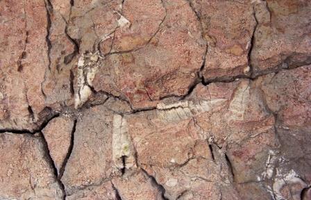 В Якутии найдены самые древние в мире останки скелетных животных, их возраст - 550 млн лет