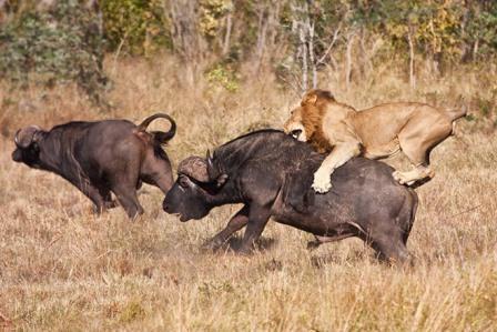 Соотношение между хищниками и добычей к
