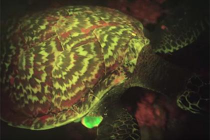 Ученые нашли первую в мире светящуюся в темноте рептилию