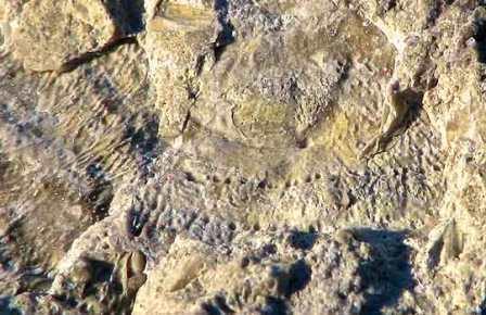 Загадочные скелетные организмы из Усть-Майского улуса