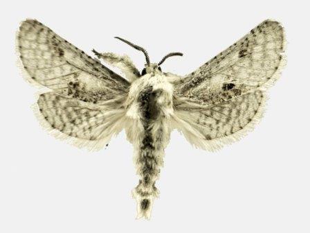 Право дать имя новому виду бабочек можно приобрести на интернет-аукционе